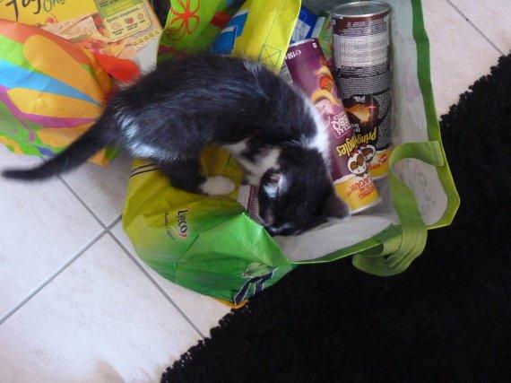 Hugo in the bag !