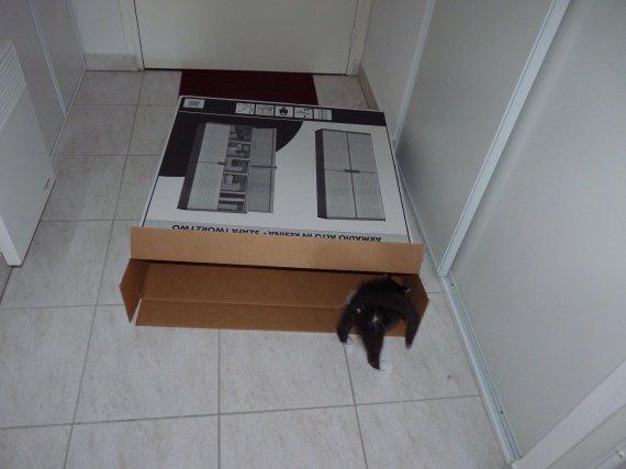 Hugo rentre dans le super carton...