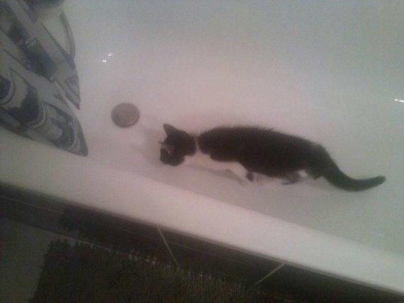 Hugo in the bath : son nouveau truc!