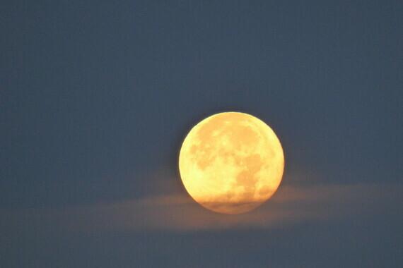(C)Ivano Ghirardini- pleine lune du Lion-Aout 2020-PSL-Port Saint Louis du Rhône- 13230-Camargue-Sud