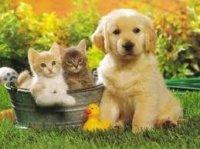 bébés chats et bébé chien