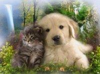 chien et chat en forêt