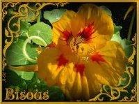 bisous fleur