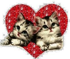 coeur et petits chats