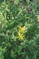 Plantes à l'automne