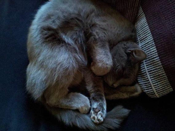 kitty16