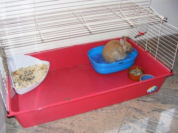 mon lapin sent mauvais hamsters cochons d 39 inde lapins forum animaux. Black Bedroom Furniture Sets. Home Design Ideas