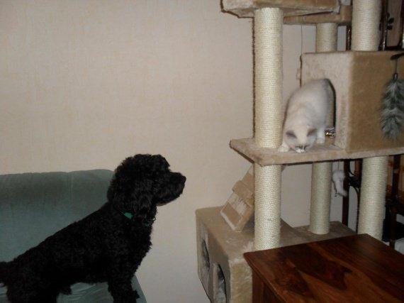 arbre minette et chat