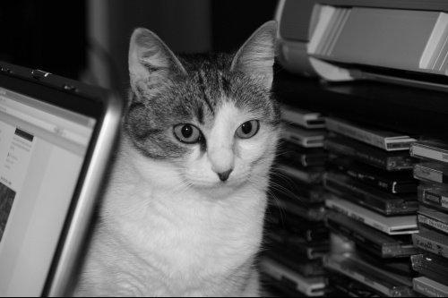 Mistie portrait