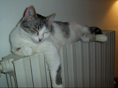 Mistie se repose