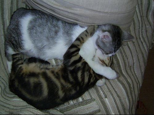 mimi et pilou