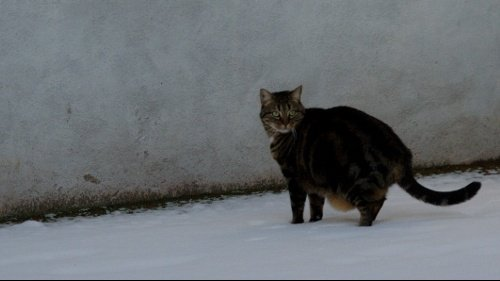 neige pillouche