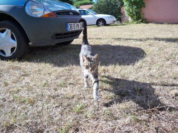 chatte voisine