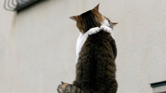 petits-animaux-bisous-gros-chats-img