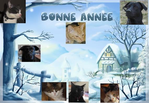 bonané