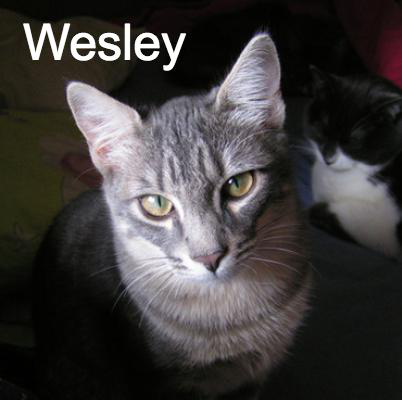 Wesley