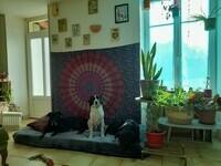 hippiesdogs