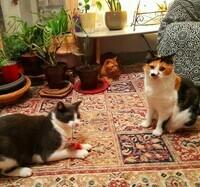 jeux chats