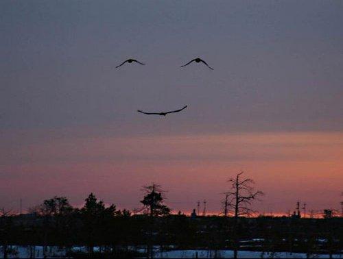 image-57df58af470263c9662cf932c7030dac-sourire-nature