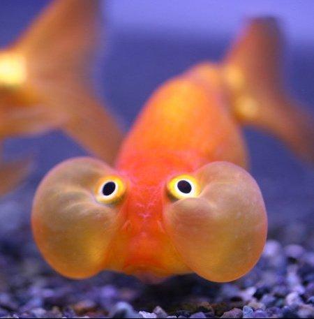 drole-poisson
