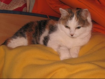 Mimi petit1