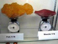 food-poids-img
