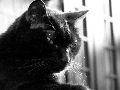 chat_noir_6