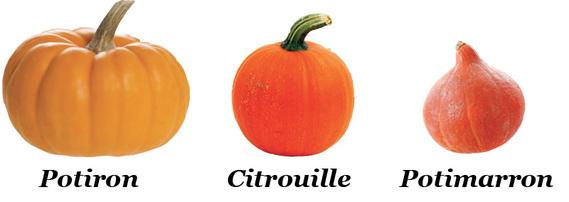 courge, potimarron, citrouille en automne