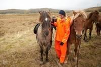 Cavalière d'Islande.