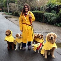 Dog  walker and dogs in raincoats