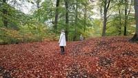 Feuilles d'automne.