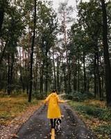 Route forestière.