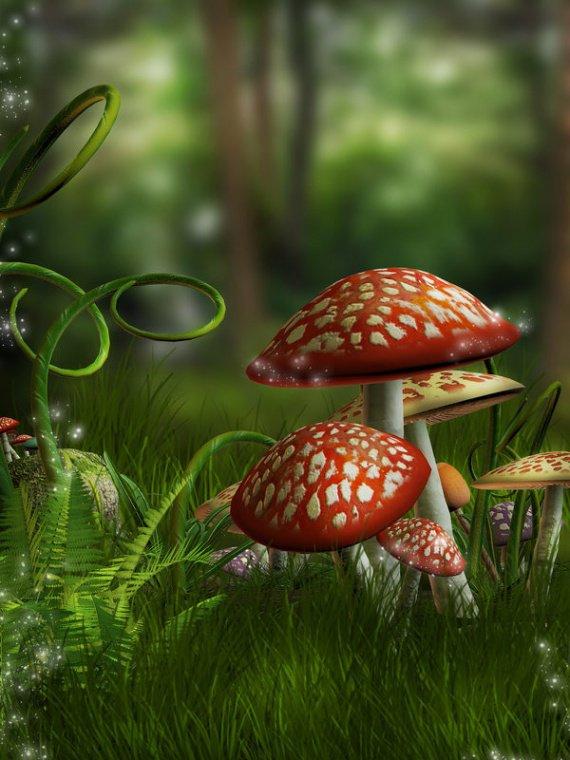image champignons