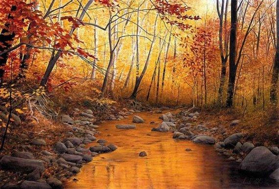 image paysage forêt