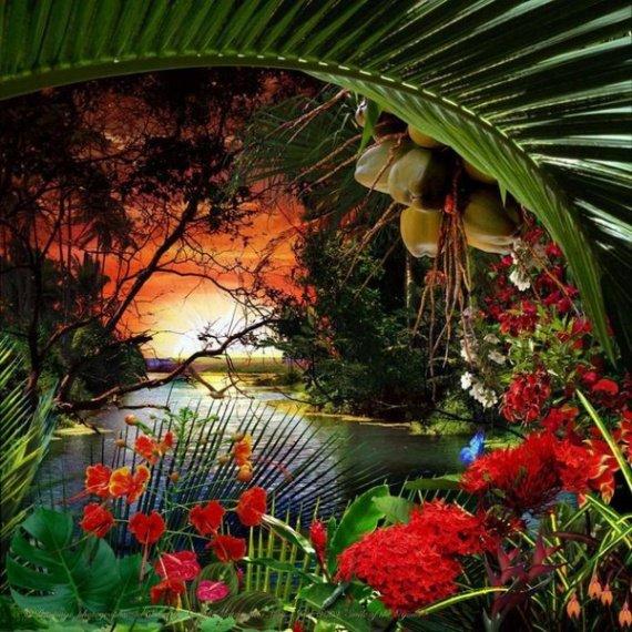 image au paradis