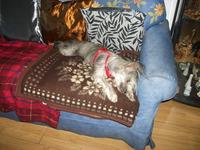grattage de nez sur canapé
