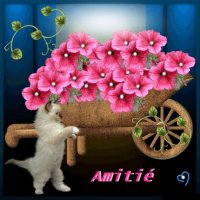 amitie-amitie-brouette-fleurie-img
