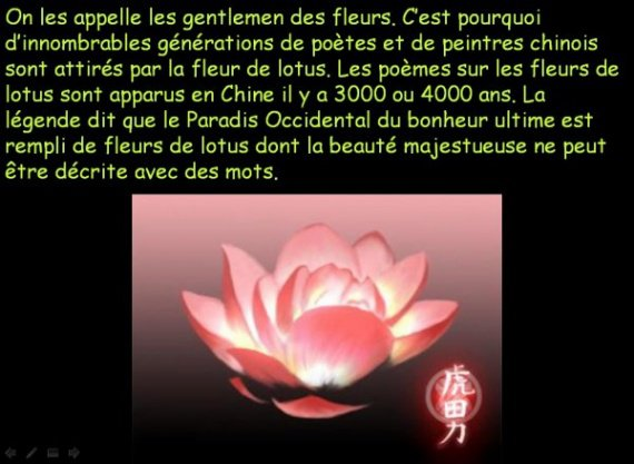 la fleur de lotus et la position du lotus en méditation