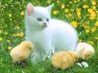 belles-images-chats-eb774abc-img