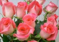 """de superbes  roses """" la vie en rose"""""""