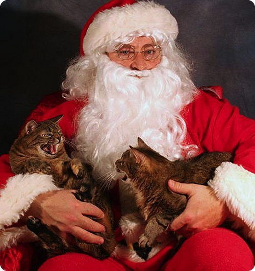 pere_noel_chat_006