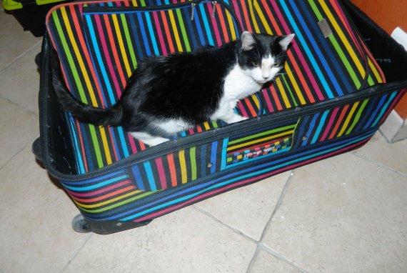 Elle était pas bien fermée la valise !