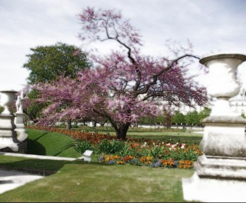 arbre violet efet montage