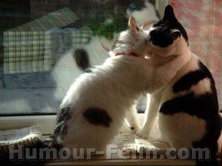 big_6204-chat-chat-animaux-kiss-google-sous-709112-