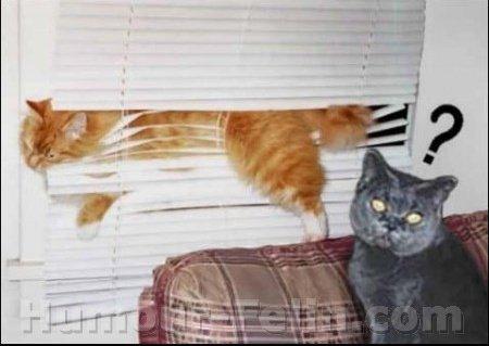 big_1563-1731-cleminou-2-chats-dormir