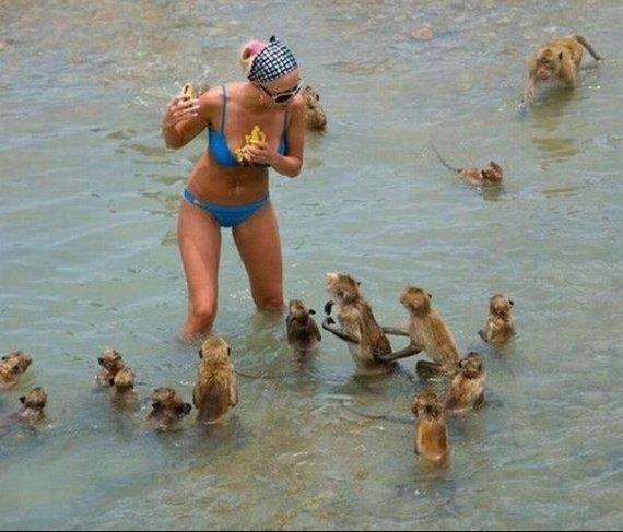 singes-dans-leau