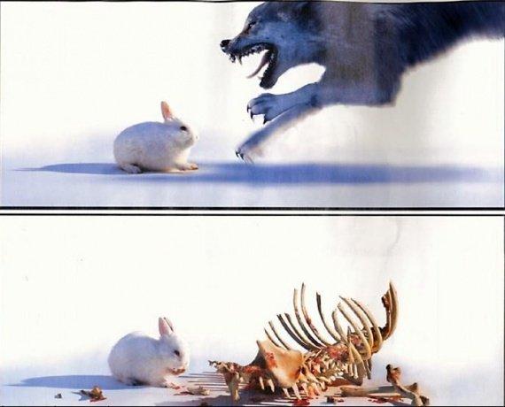 071121102645_humour-animal