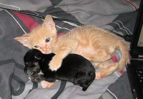 chat-et-chien