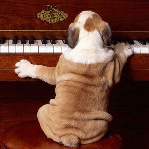 images-droles-chien-piano-p