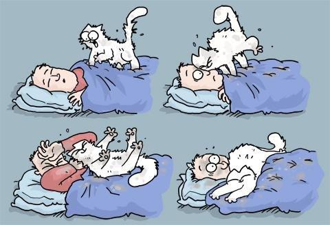 midnight-wet-cat